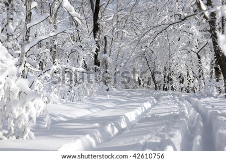 white winter landscape with forest road end blue sky - stock photo