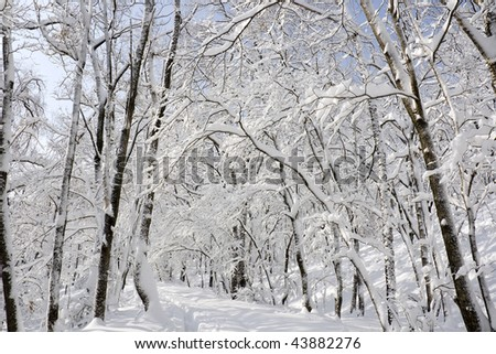 white winter landscape with forest road end blue sky