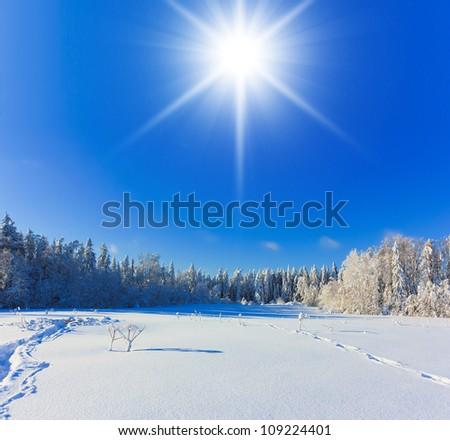 White Winter Magic - stock photo