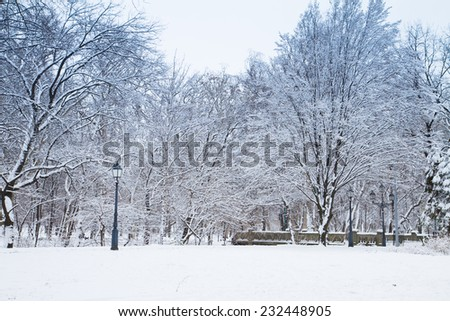 white winter park with fresh snow and trees - stock photo