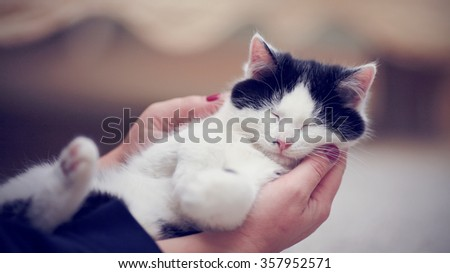 White with black a kitten on hands. The animal protection.