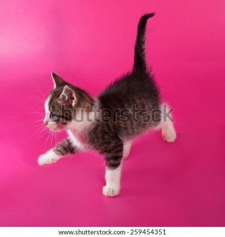 White with striped kitten going on pink background - stock photo