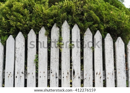 White wood wall near green tree