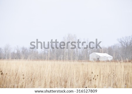 White wooden barn in the distance with brown overgrown grass in the foreground with leafless trees in the back.