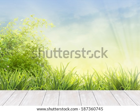 white wooden boards terrace in garden with green grass,ornamental shrubs against blue sky and sunlight - stock photo