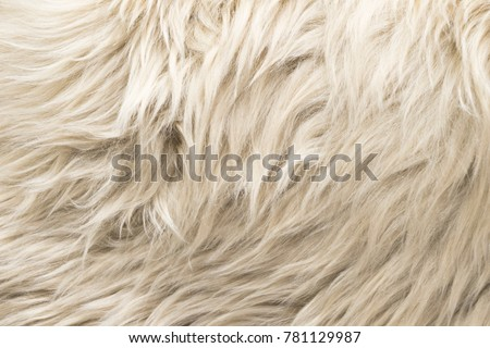 White Wool Texture Background Natural Fluffy Stock Photo Royalty Free 781129987