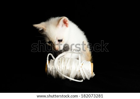 White Young Baby Cat on a Black Background