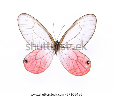 Whiten and red butterfly on  isolated  white background - stock photo