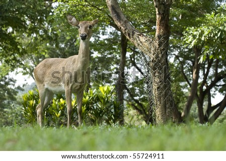 Whitetail buck deer in zoo