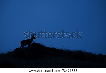 Whitetail Buck Deer Silhouette