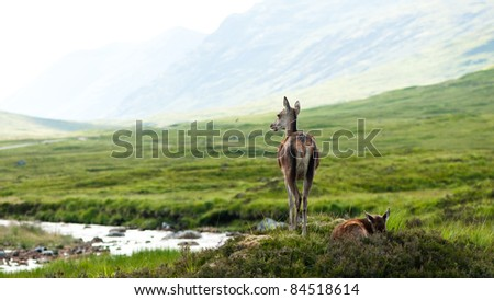 whitetail buck female with cute baby - stock photo