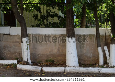 Whitewashed sidewalk garden tree trunks and fence painted white with limestone. Traditional narrow street in Athens, Greece.