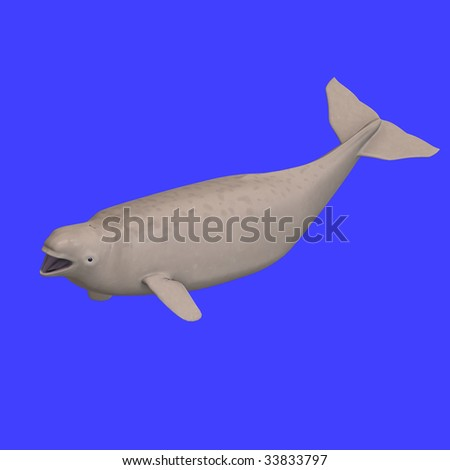 whitle beluga whale calf. 3D rendering with clipping path - stock photo
