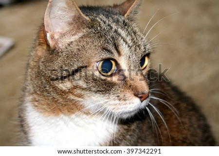 Who That Cat - stock photo