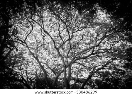 whole black tree - stock photo