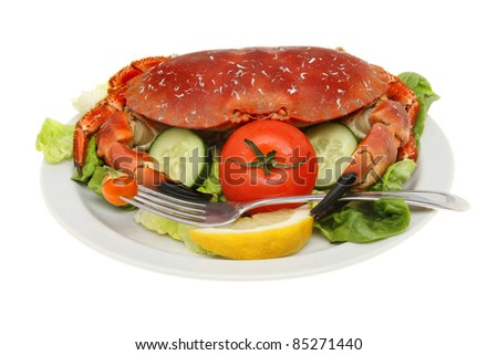 Whole brown crab with a fork in its claw on a bed of salad isolated against white