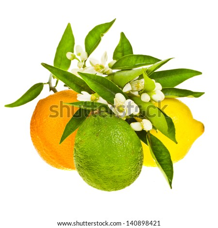 whole citrus fruits - lemon, orange, and lima, decorated with green leaves and flowers isolated on white background - stock photo