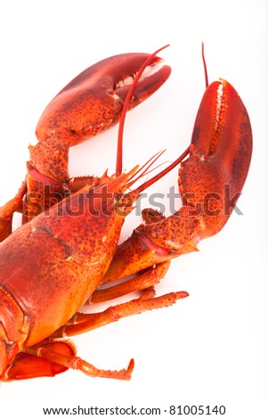 Whole cooked lobster, isolated on white background - stock photo