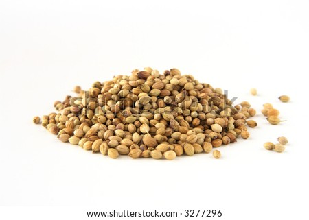 whole dhania coriander, isolated on white. Shallow depth of field, focused on the centre of the pile.