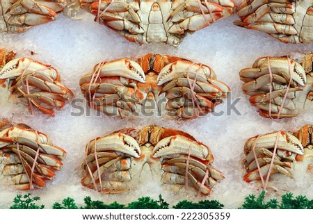 Whole Dungeness Crab - stock photo