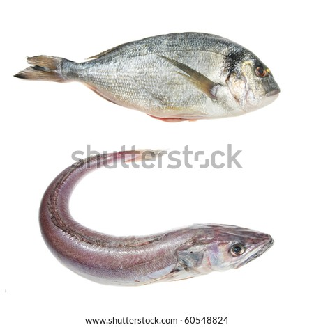 Whole hake and sea bream fish isolated on white
