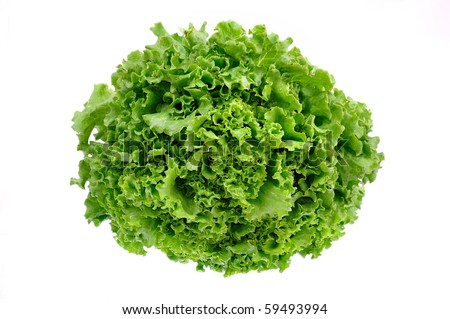 whole lettuce - stock photo