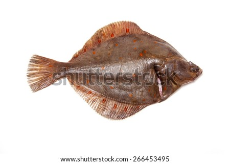 Whole Plaice flatfish isolated on a white studio background.
