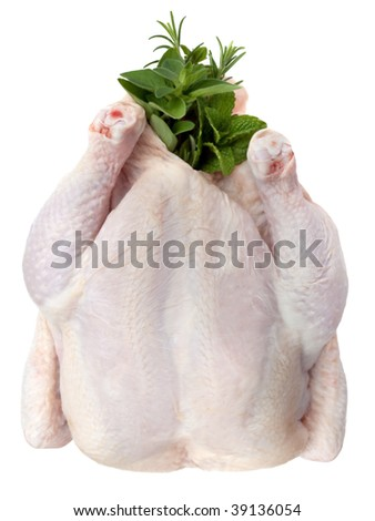 Whole raw chicken, stuffed with herbs ready for roasting.  Overhead view, isolated on white. - stock photo
