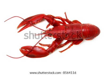 whole red lobster isolated on white background - stock photo