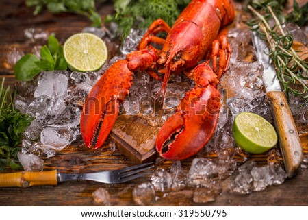 Whole red lobster on ice with lime and herbs - stock photo