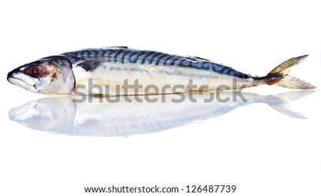 Whole row Mackerel Fish (Scomber scrombrus) with reflection. Isolated on White Background - stock photo