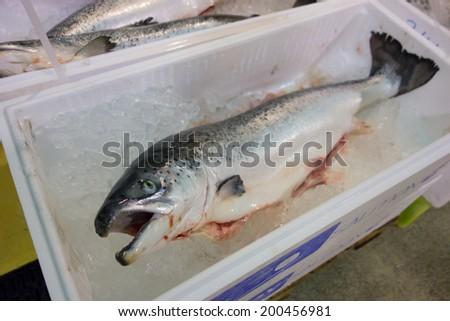 whole salmon for sale - stock photo