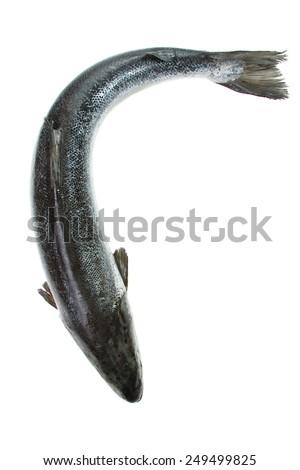 Whole salmon isolated on white. Top view - stock photo