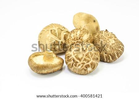 Whole Shiitake mushroom fresh tasty fragrant on white background  - stock photo