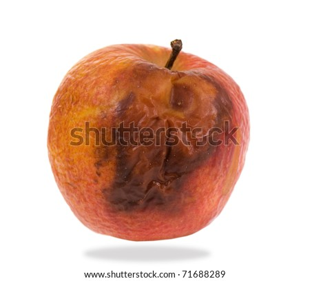 Whole single decayed bad red apple fruit with wrinkled peel on white background, wastage of rotten food. Nobody, studio shot.