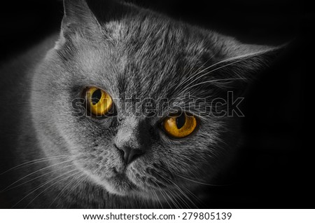 Wicked yellow-eyed cat - stock photo