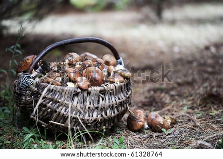 Wicker basket full of various kinds of mushrooms in a forest - stock photo
