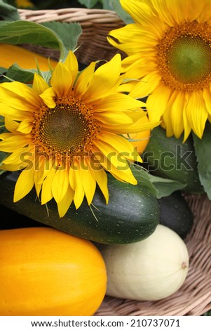 Wicker basket full of vegetables and flowers colors of summer, zucchini and sunflowers