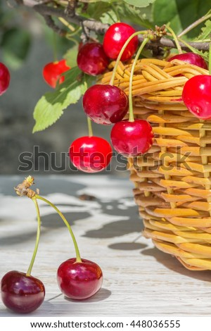 Wicker basket, red ripe cherries on white wooden table and on a branch with green leaves in the garden on a sunny summer day - stock photo