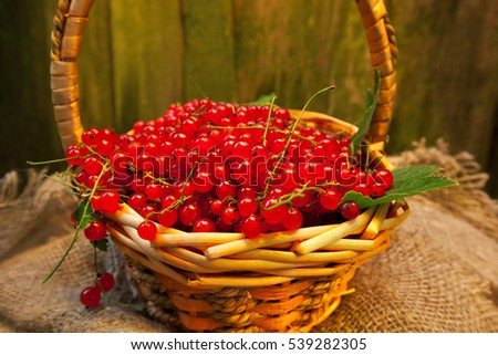 Wicker basket with berries of red currant. Still life in retro style