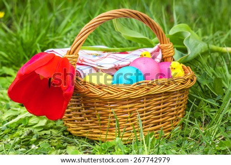 Wicker basket with colored eggs, red tulip and toy chicks in the green grass on a spring day - stock photo