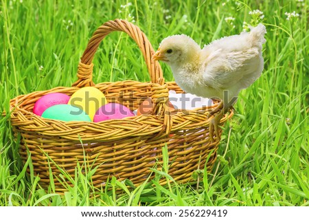 Wicker basket with Easter painted eggs and chicken on the spring green grass - stock photo