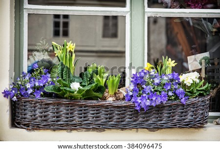 Wicker basket with spring flowers on the window. Bluebells and yellow daffodils. - stock photo