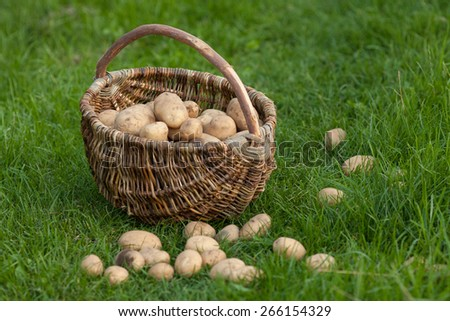 wicker baskets with potato - stock photo