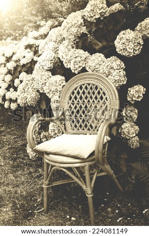 Wicker chair with faded velvet pillow and hydrangea bushes in the garden. Soft evening light. Brittany, France. Vacation at countryside background. Retro aged photo. Sepia. - stock photo