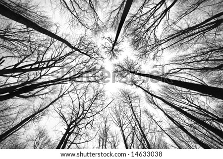 wide angle of bare branches of trees in black and white