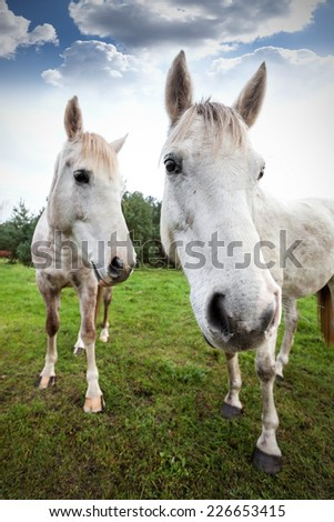 Wide angle picture of two horses, shallow depth of field.