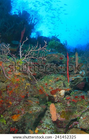 Wide Angle Shot of Colorful Coral Reef with a School of Fish - Roatan, Honduras - stock photo
