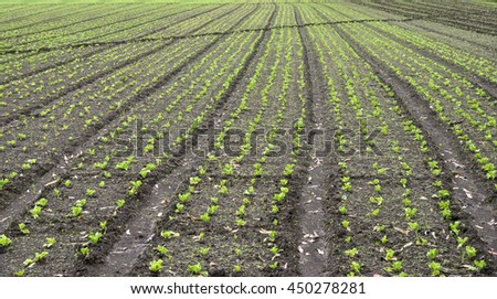 wide angle view of a fresh planted field in the Highlands of Panama - stock photo