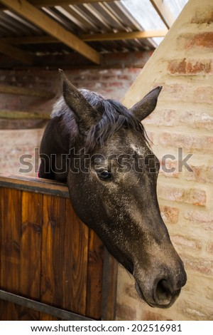 Wide angle view of a horse in a stable on a farm in South Africa
